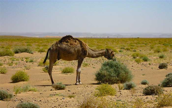 Desert Animals Desertusa Autos Post