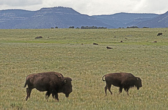 american great plains animals - photo #16