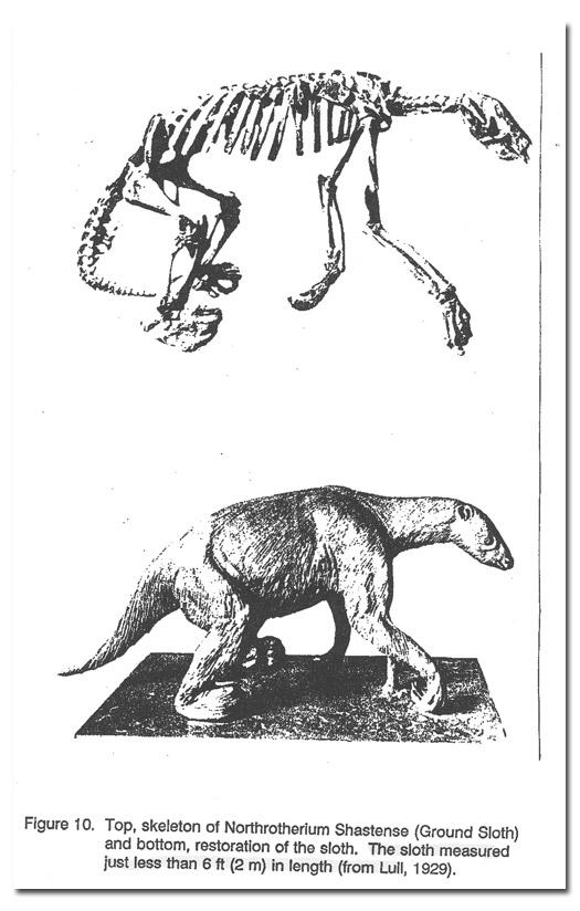 skeleton and restoration of ground sloth