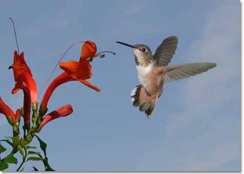 How to create a backyard nature preserve desertusa hummingbird mightylinksfo