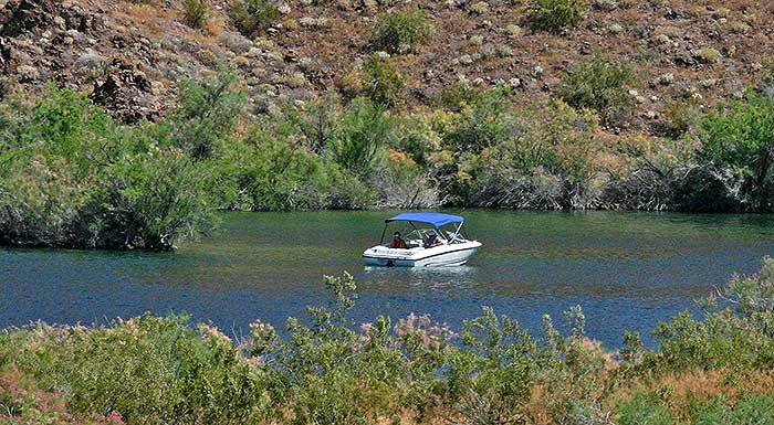 Lake mohave part of lake mead nra desertusa for Fishing lake mead from shore