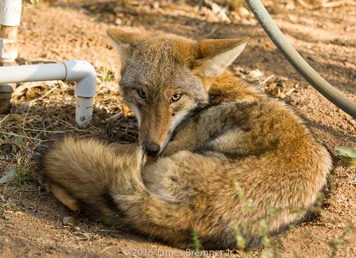 6 ways to get close up photos of desert animals desertusa