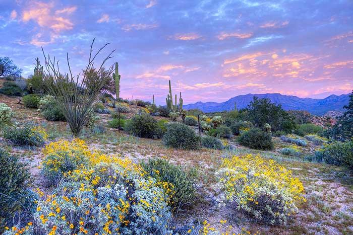Water Conservation Gardening DesertUSA