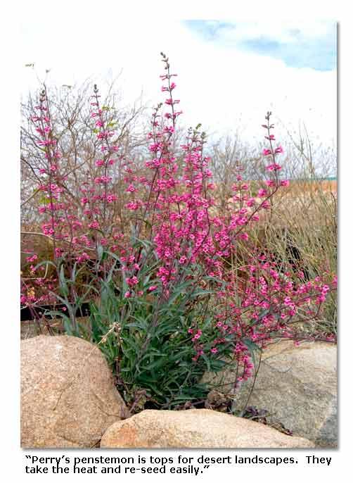 Desert plants for landscaping desertusa for Best plants for desert landscape