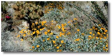 Arboretums U0026 Botanical Gardens. Arizona
