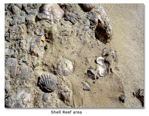 Seashells in the Desert - DesertUSA
