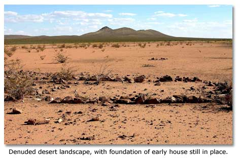 Russian Thistle Desertusa Home