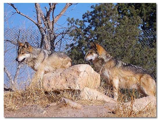 Living Desert Zoo And Gardens State Park Desertusa