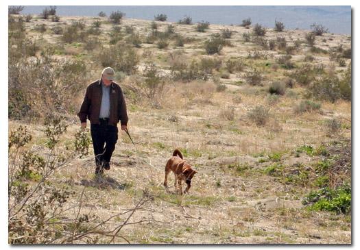 Walking dog in desert