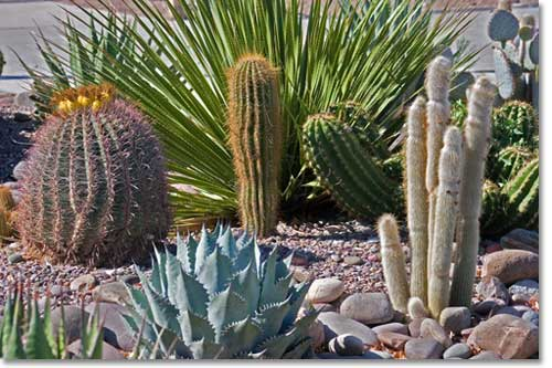 A Wide Diversity Of Exotic And Colorful Plants Are Available To The Desert  Landscaper.