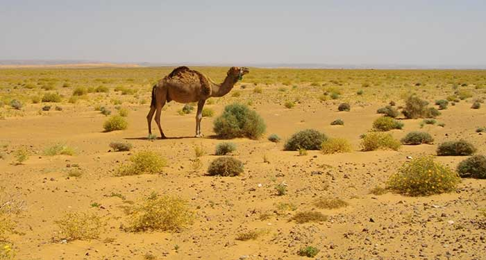 The Sahara Desert: Wildlife, Plants, People and Cultures ...