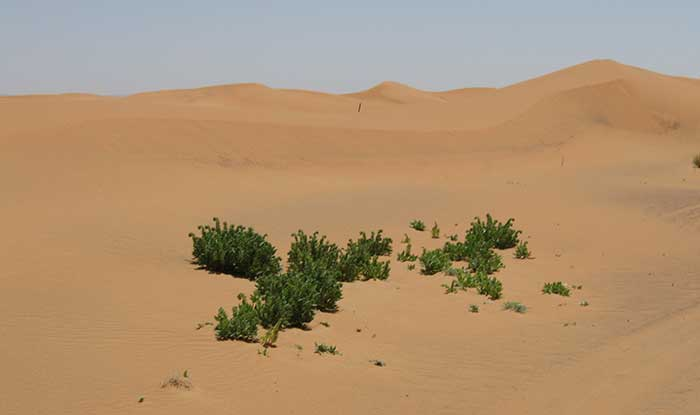 The Sahara Desert Wildlife Plants People And Cultures - African desert names