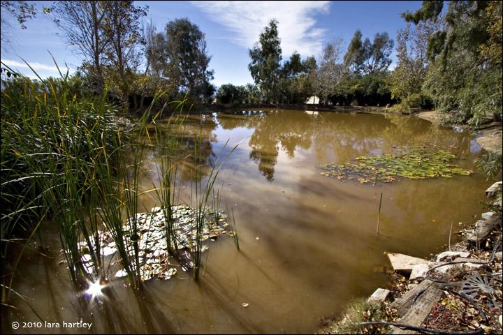 Pond oasis