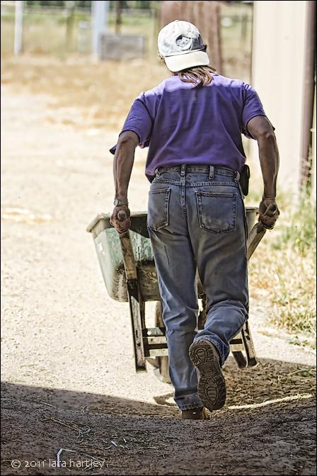 8204_helen-meredith-wheelbarrow_3_neat_crisp_crop_2-use-use