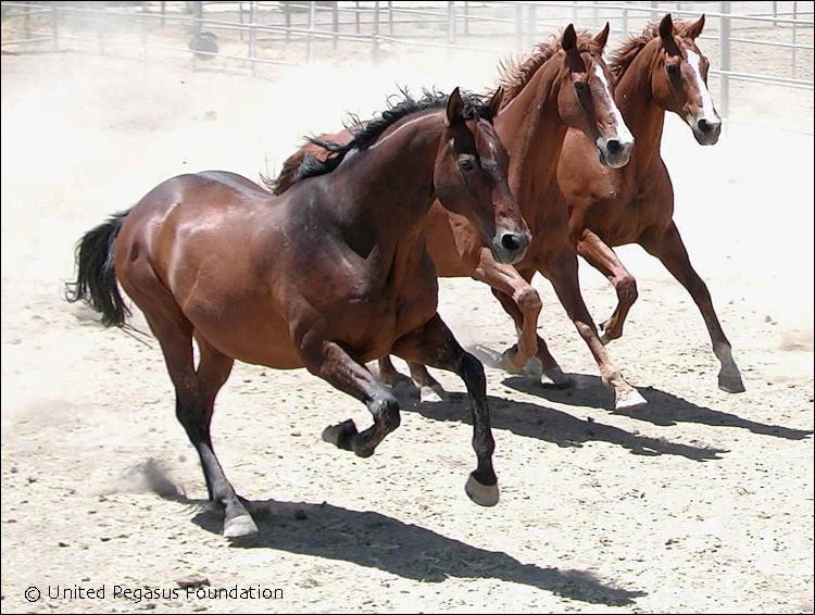 pegasus-horses_1_use