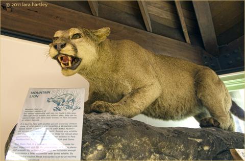 5617_placerita-wildlife-exhibit_4