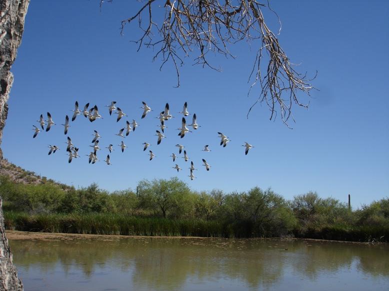 Easing of Fire Restrictions in Southeast Arizona as Monsoon Season Arrives