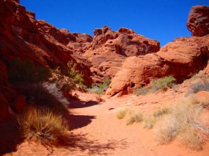 BIGHORN VALLEY OF FIRE 5
