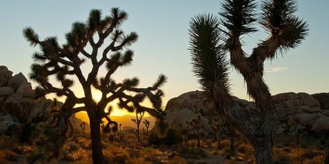 Hi-Desert near Joshua Tree
