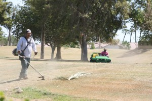 Maintenance crew is cutting down and removing bermuda clippings to prepare the surface for overseeding.