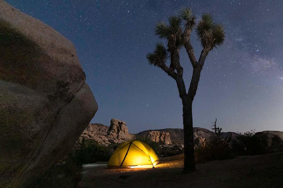 Joshua Tree Night Camp