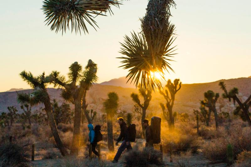Insider's Guide to Joshua Tree
