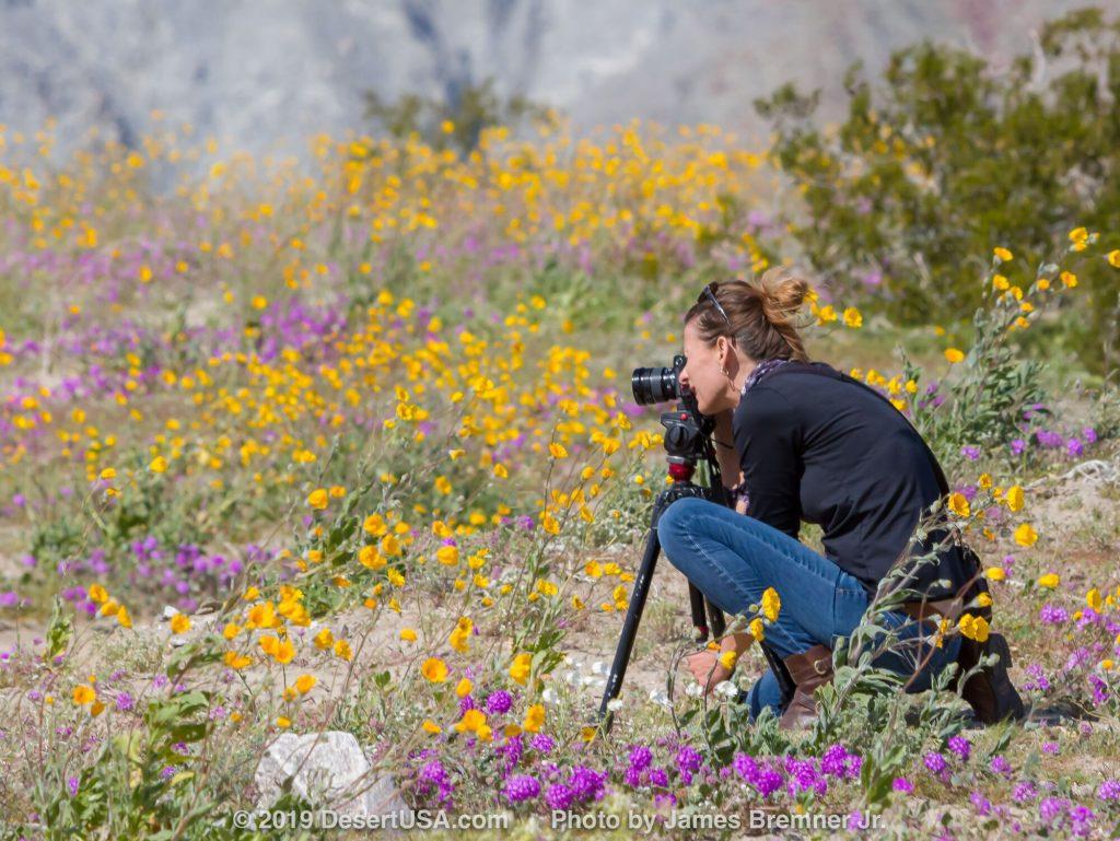 Photo of woman taking photos of desert wildflowers.