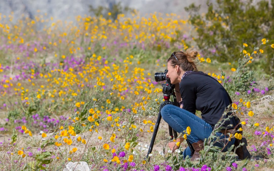 Can't Find the Desert Wildflowers? Current Wildflower Reports and Maps