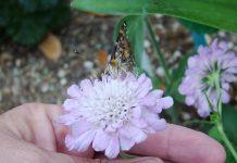 butterfly on butterfly flower