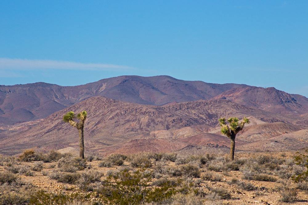 Oasis Valley Landscape. Photo  by Crawling Spider Photography.