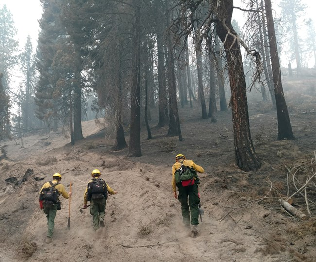 NPS Reduces Wildfire Risk Across Record 5.4 Million Acres