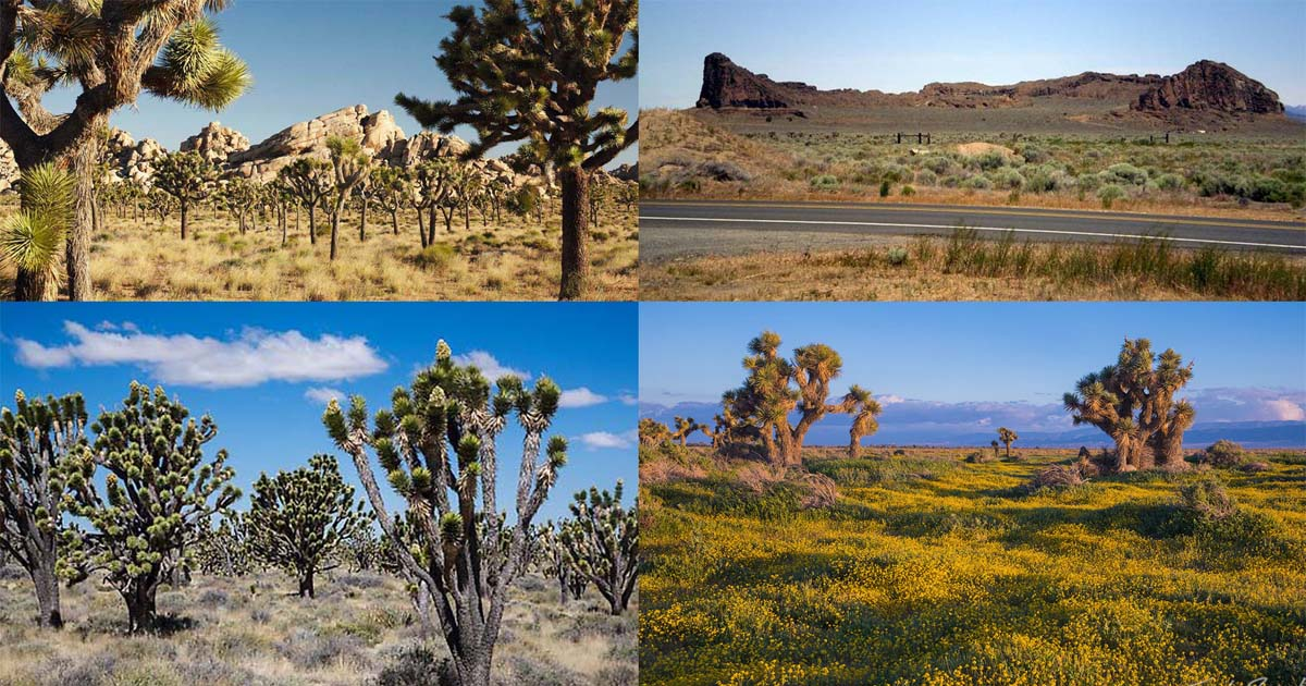 Which Mojave Desert Do You Know? Click On The Picture To Find Out :)