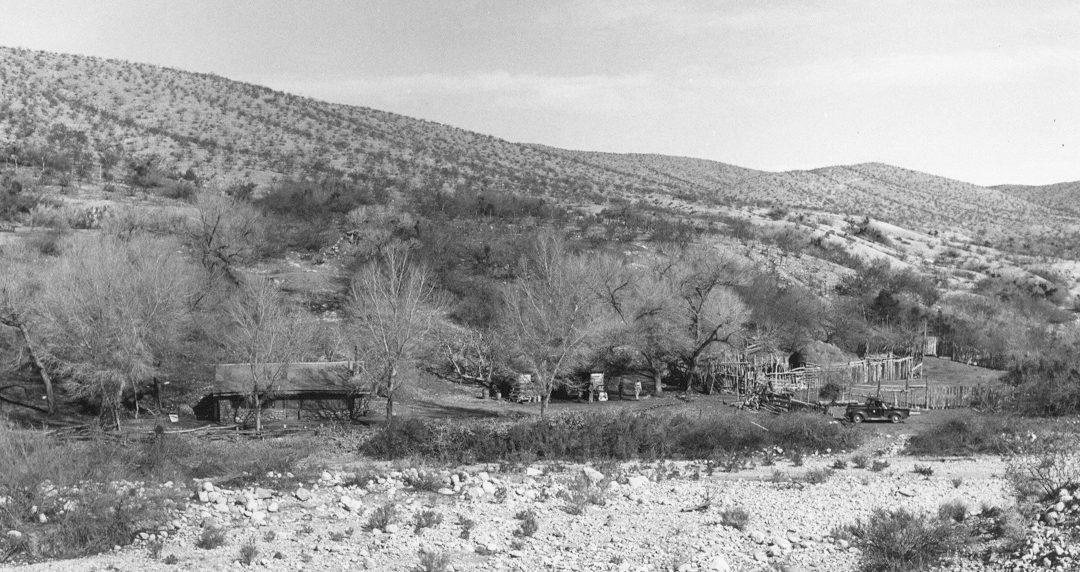 Tassi Ranch Hazardous Tree Removal