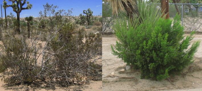 Wild & Watered Creosotes