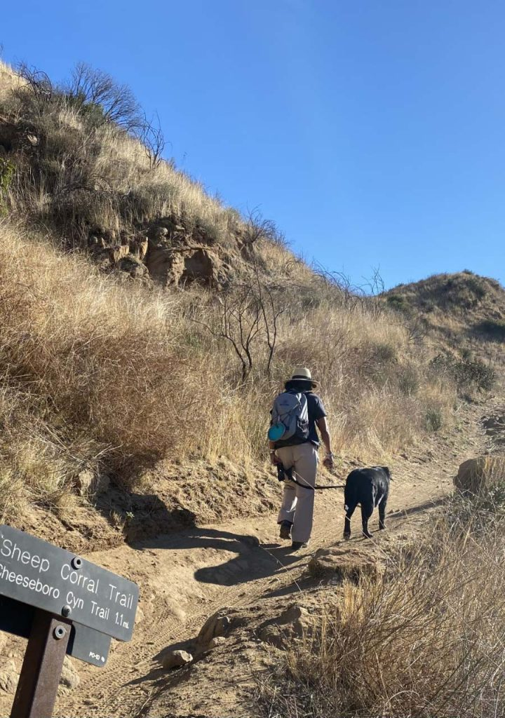 Dog and hiker on trail
