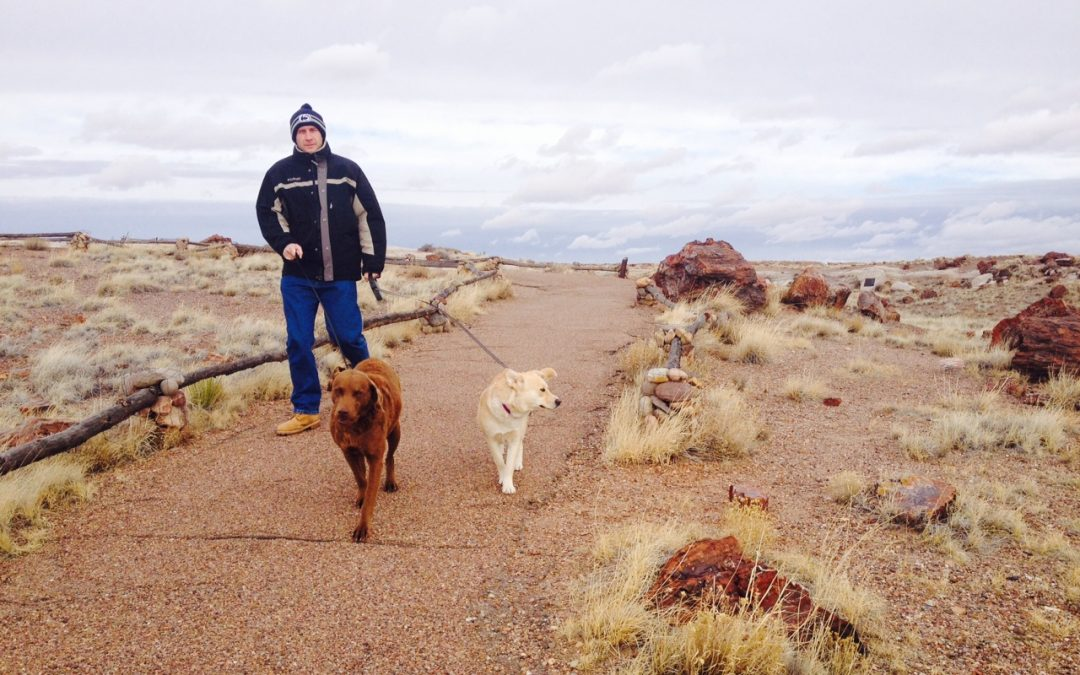 Petrified Forest National Park Fee Free Days 2021 Starts with Martin Luther King Jr. Day