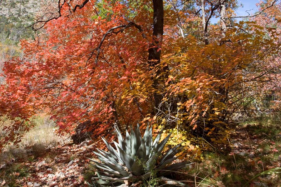 Guadaloupe Mountains in the Fall