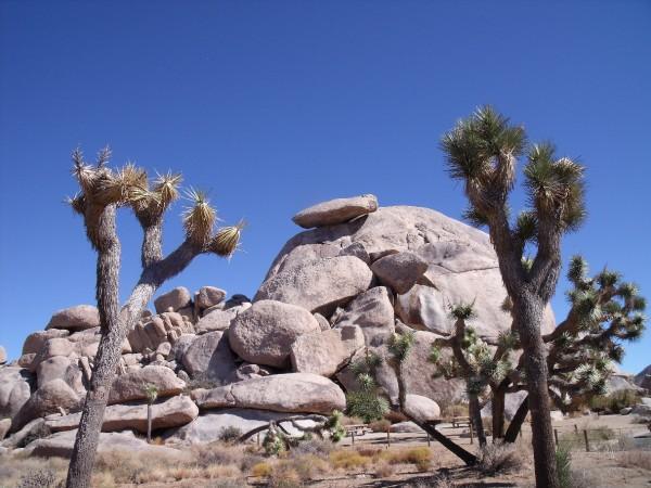 Cap Rock at Joshua Tree