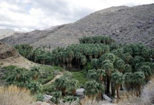 A view of Palm Canyon from the trailhead at the parking lot.