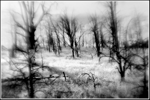 Evidence of the Seqouia National Forest's 2000 Manter Fire can still be seen today. Using a LensBaby in this image increased the sense of mystery and desolation.