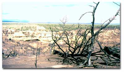 Mesa Verde after the fire of 2000