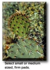 Nopales Recipe (Cactus Pads)
