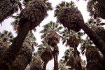 palms0059