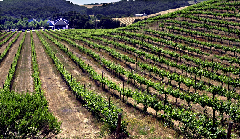 Leading lines, also called vectors, like these rows of grape vines, take the eye into a specific part of the image, in this case, the house and winery.