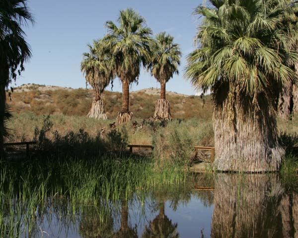 An Oasis in the Desert: The Thousand Palms Oasis Preserve