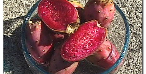The prickly pear cactus fruit has a sweet flavor as well as health benefits.
