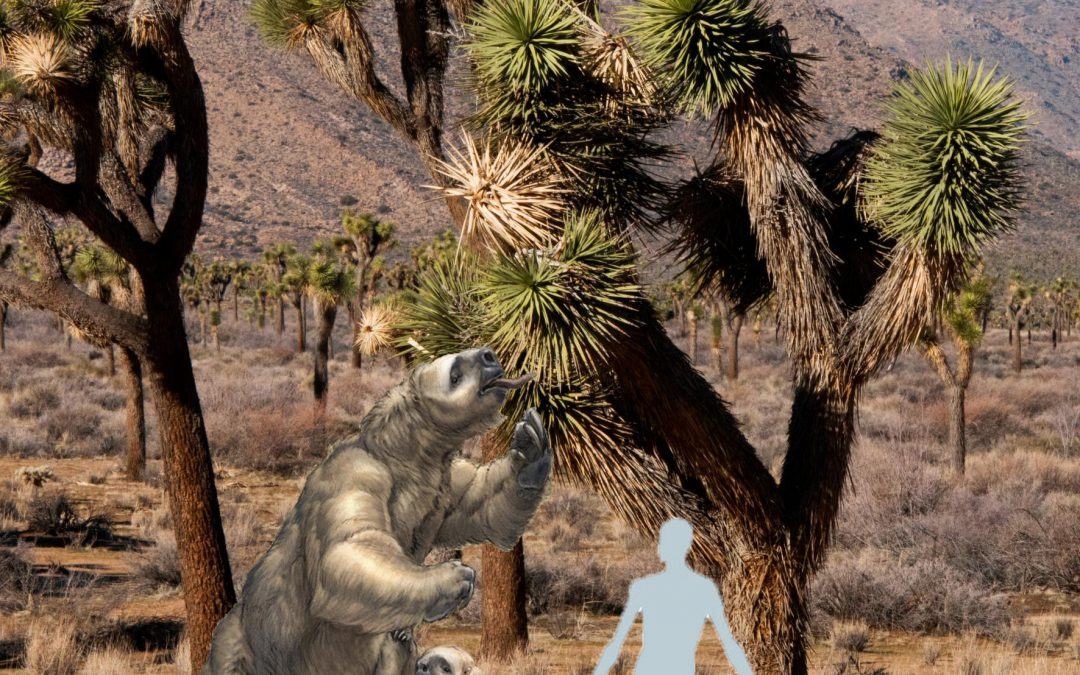 The Other Blooms of the Mojave Desert – Don't Be a Sloth, Visit Soon