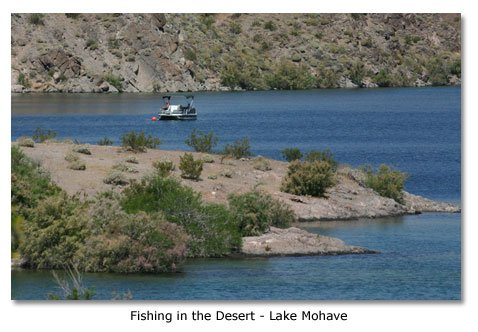 Deserts destinations parks cities museums desertusa for Lake mohave fishing report