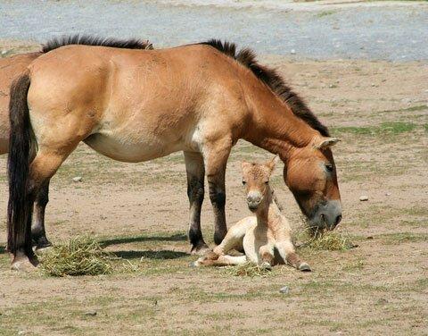 The Gobi Desert: Wildlife, Plants and Culture - DesertUSA