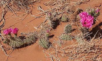 Desert Life Animal Plants People Desertusa